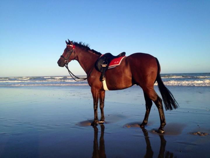 Beach Ponies!